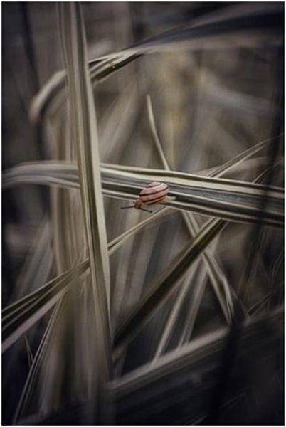 slow life nature herbes escargot bernieshoot