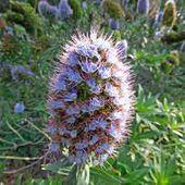 Le jardin botanique de Funchal à Madère
