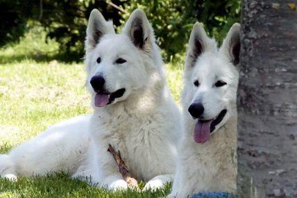 Isy et I'lander du loup de la vieille eglise profite du beau soleil pour profiter du jardin