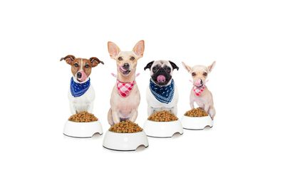 Freeze-Dried Food…Dogs Eat It Up