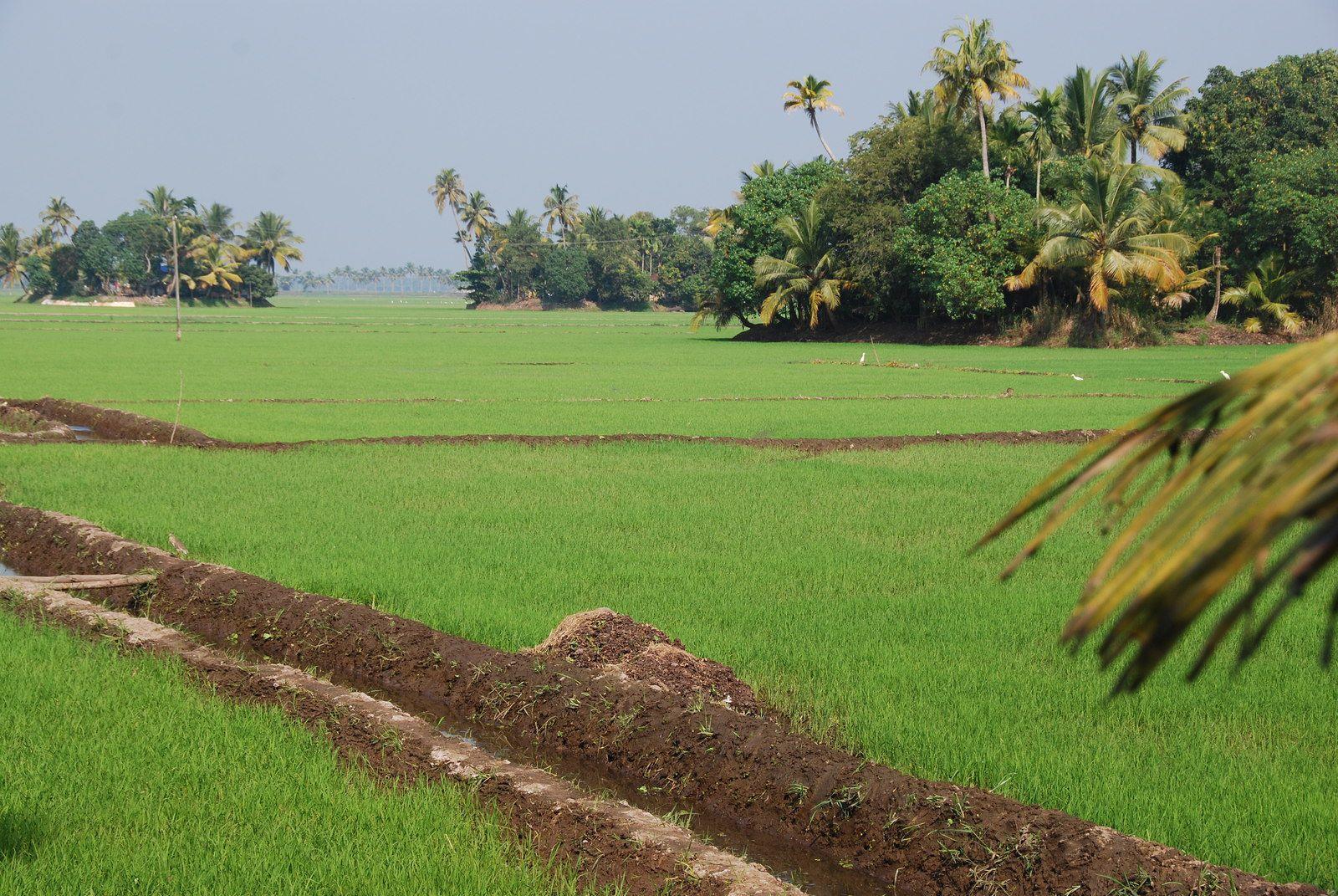 Inde du Sud / 3 / Il est 08h33, nous sommes le 7 Novembre 2020