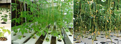 CREATE DESIRED ENVIRONMENT FOR QUALITY CULTIVATION