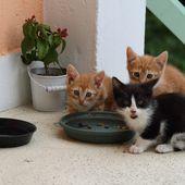 association la voix des chats