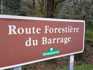 Sur la route forestière du Barrage, les 142 mètres de la chaussée posée sur la voûte permettent de franchir la Vendée.