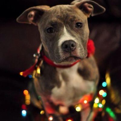 Feliz navidad manada