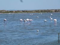 Quelques flamants roses...tranquilles !