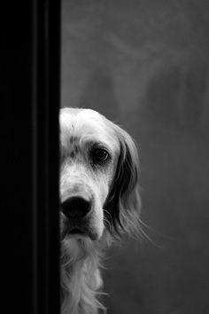 Expressions du ont du chien.