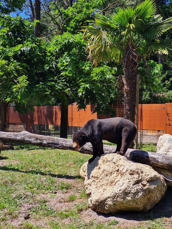 Visite du magnifique zoo de la Teste-de-Buch
