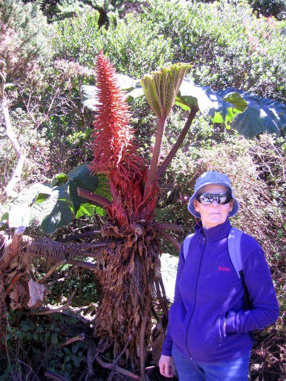 Au programme faune, flore exubérante et volcans.
