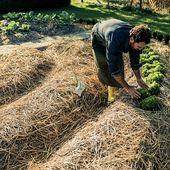 Ce village breton vise une autonomie alimentaire totale... et 100% issue de la permaculture !