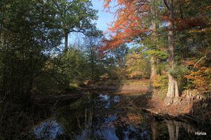 Randonnée de Bois le Roi à Fontainebleau - Avon en passant par la forêt de Fontainebleau