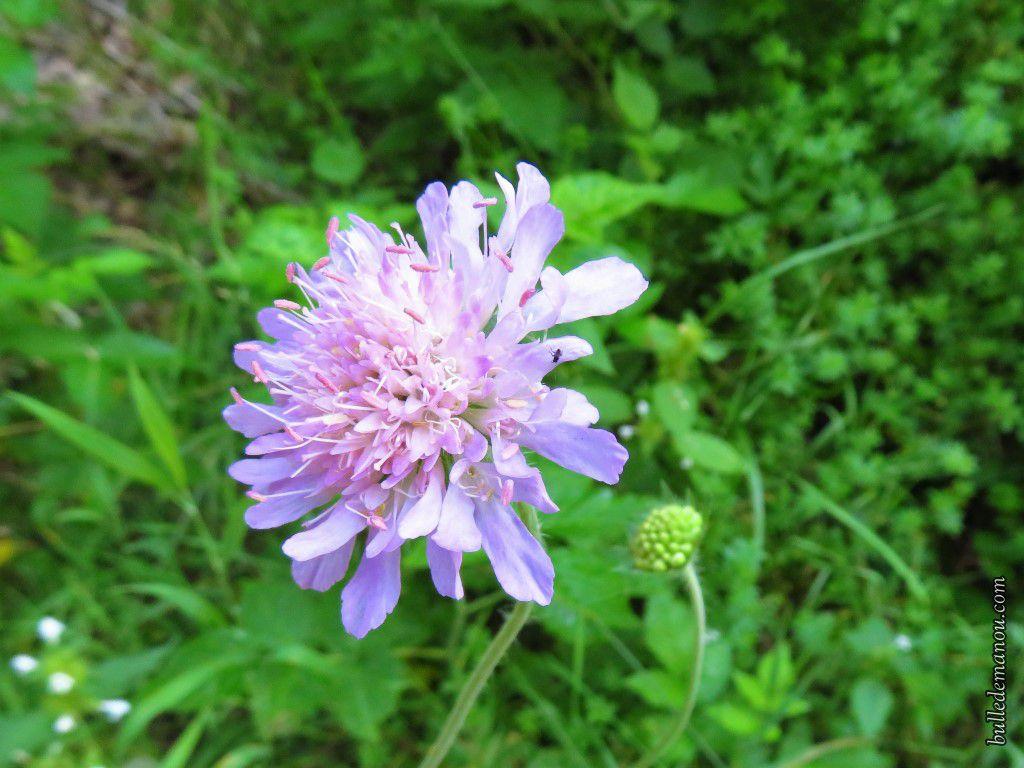 Quelques jolies fleurs d'été juste pour le plaisir des yeux aujourd'hui !