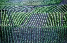 The Ahr & Viticuture