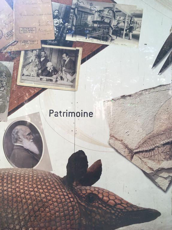 Museum d'histoire naturelle et préhistoire de Nîmes