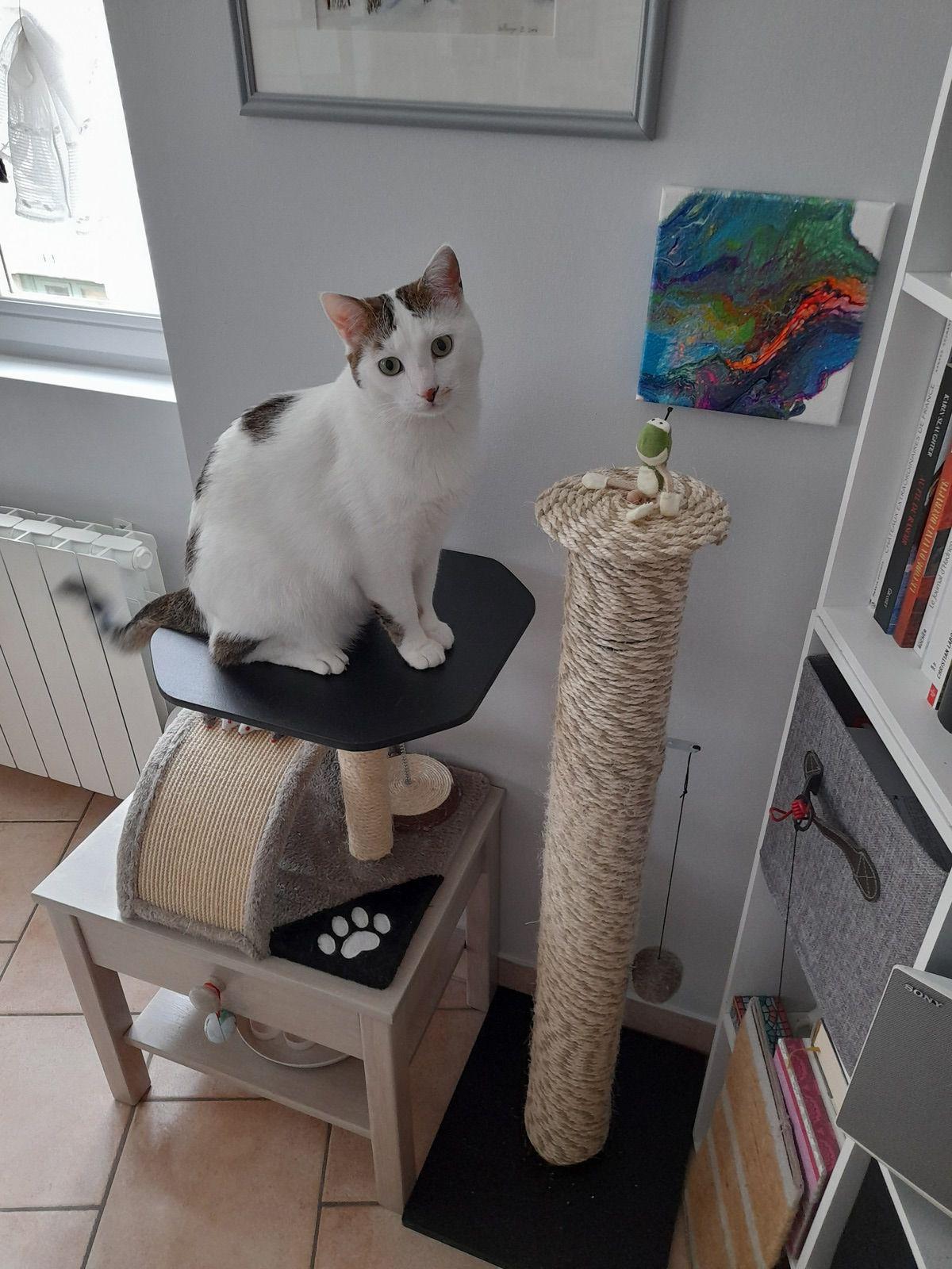 2020 Réalisation d'un griffoir pour Pelote avec un tuyau en PVC, une planche de médium et 60 m de corde / modification de l'arbre à chat (remplacement du plateau de couchage)