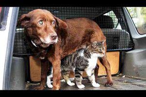 Un chat-guide d'un chien sourd et aveugle... devenus deux grands amis