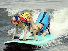 Chris de Aboitiz Dog Surfing