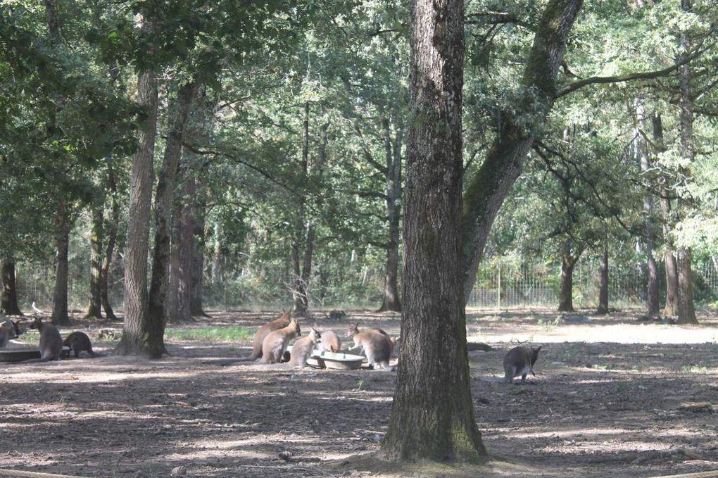 2 - En route pour la réserve zoologique de la Haute Touche