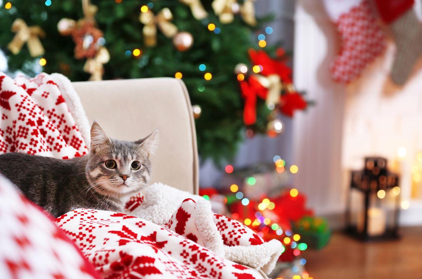 Les meilleures calendriers de l'Avent 2021 pour chat