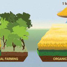 Les aliments biologiques sont pires pour le climat