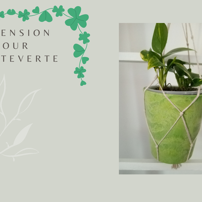 Suspension pour plante verte