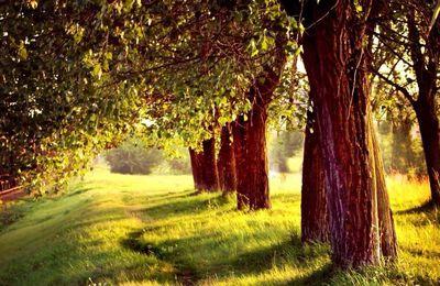 Les vrais amis sont comme les arbres