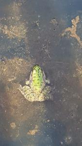 Le leçon de la grenouille