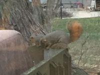 c'et le printemps ... des ecureuils du moins