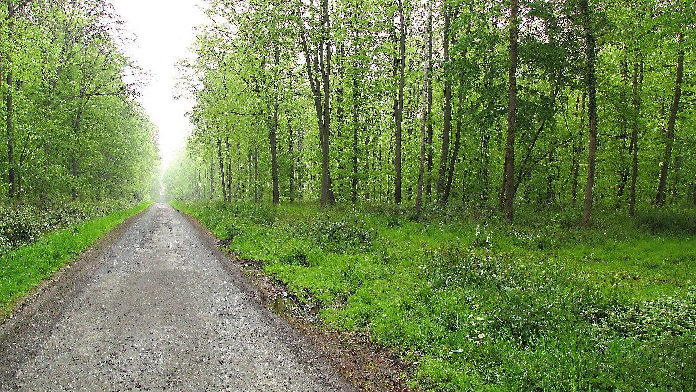 carrefour_Route du Pendu_Laie du Petit Etang