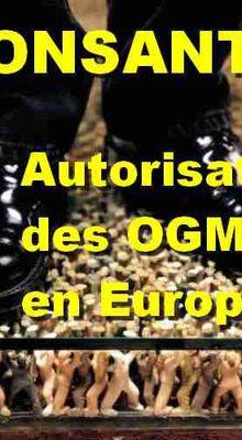 Autorisation de mise sur le marché de pollen produit à partir de maïs MONSANTO 810 (MON-ØØ81Ø-6), en application du règlement (CE) n° 1829/2003 du Parlement européen et du Conseil