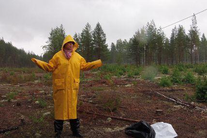 Finlande : Toujours plus d'arbres