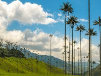 From Cartegena to Hotel las isla, landscape stays amazing- @copyright Colombia pictures