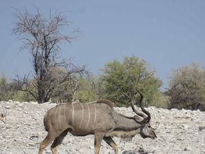 Parc animalier Etosha (sud)