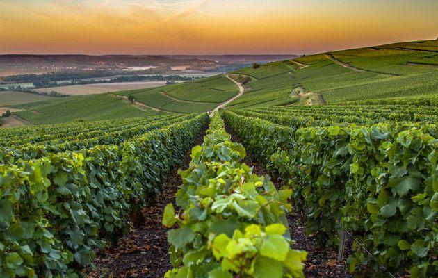 Les vins de Cépages, en France