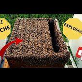 Une ruche explosive, incroyable!!!!