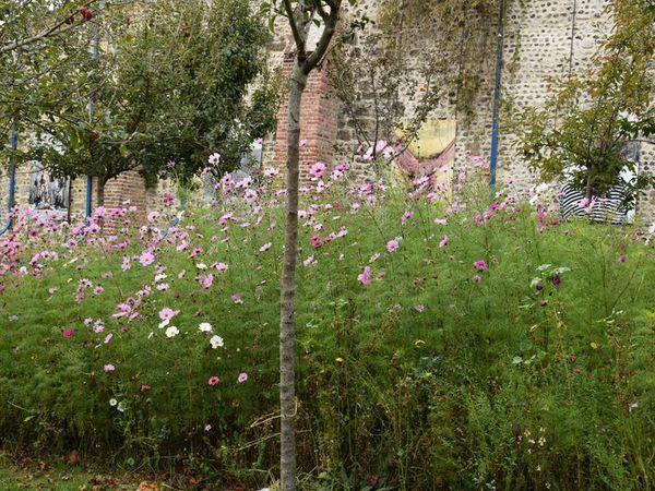 L'herbarium de Saint Valery : du charme, du charme et encore du charme
