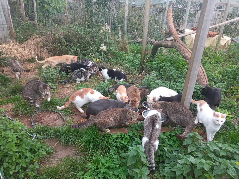 Quelques photos de certains de nos chats sauvages lors du nourrissage aujourd'hui.