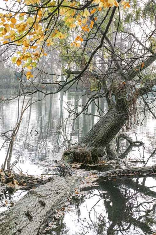 arbres - photographies - automne 2015