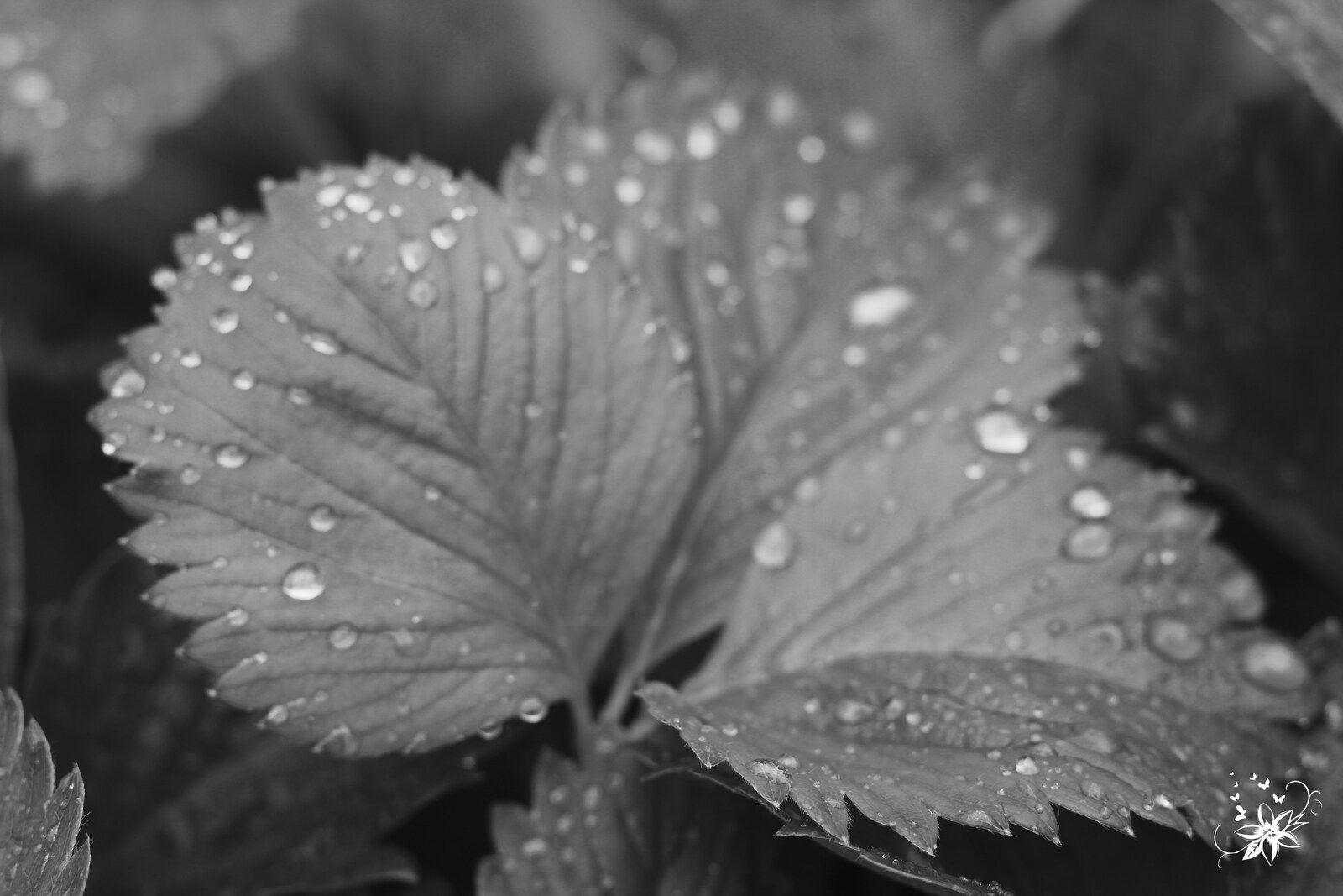 j'ai photographié la pluie et la journée est passée entre les gouttes.