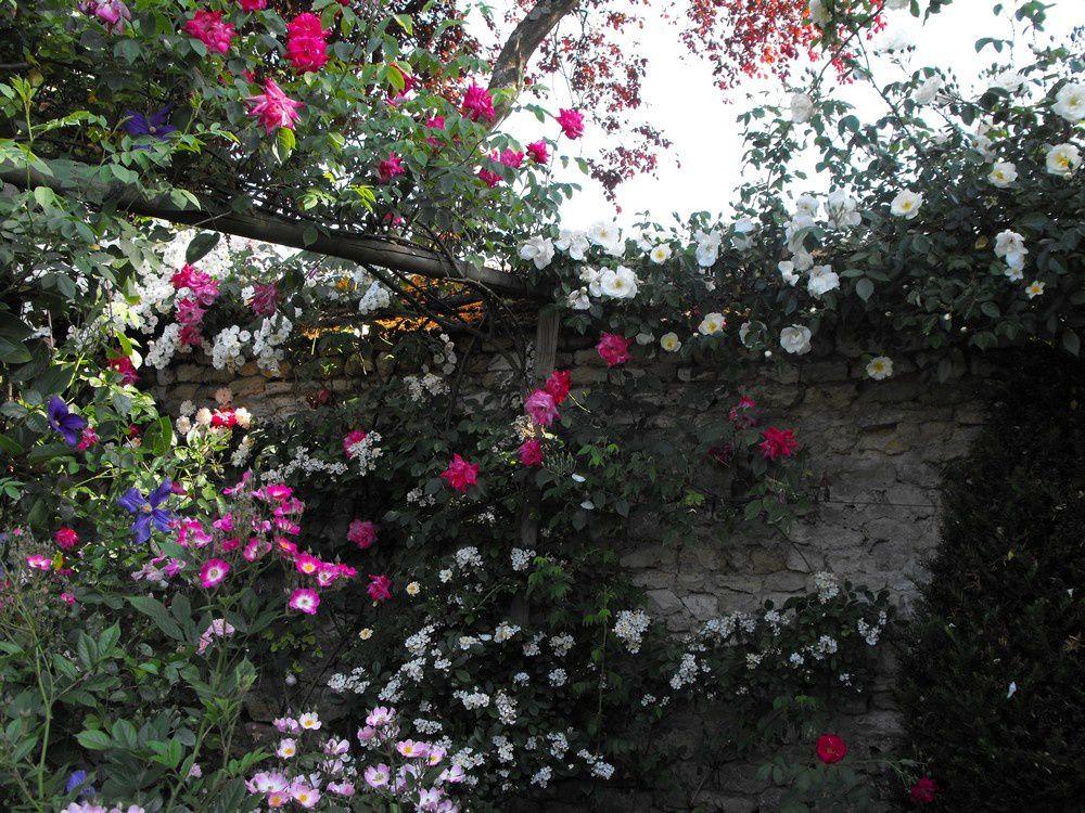 une roseraie sublime à Pithiviers (45)