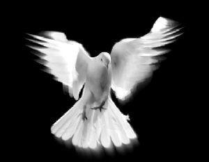 GODF : « la Maçonne » va réveiller le rite des Amazonnes.