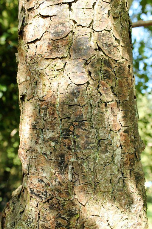 Un quizz sur les arbres de Saint Genis  les Ollières a été organisé avec la médiathèque et les services techniques. Les questions consistaient à assembler les troncs et les feuilles ou les fruits et les feuilles ou géo-localiser des arbres.