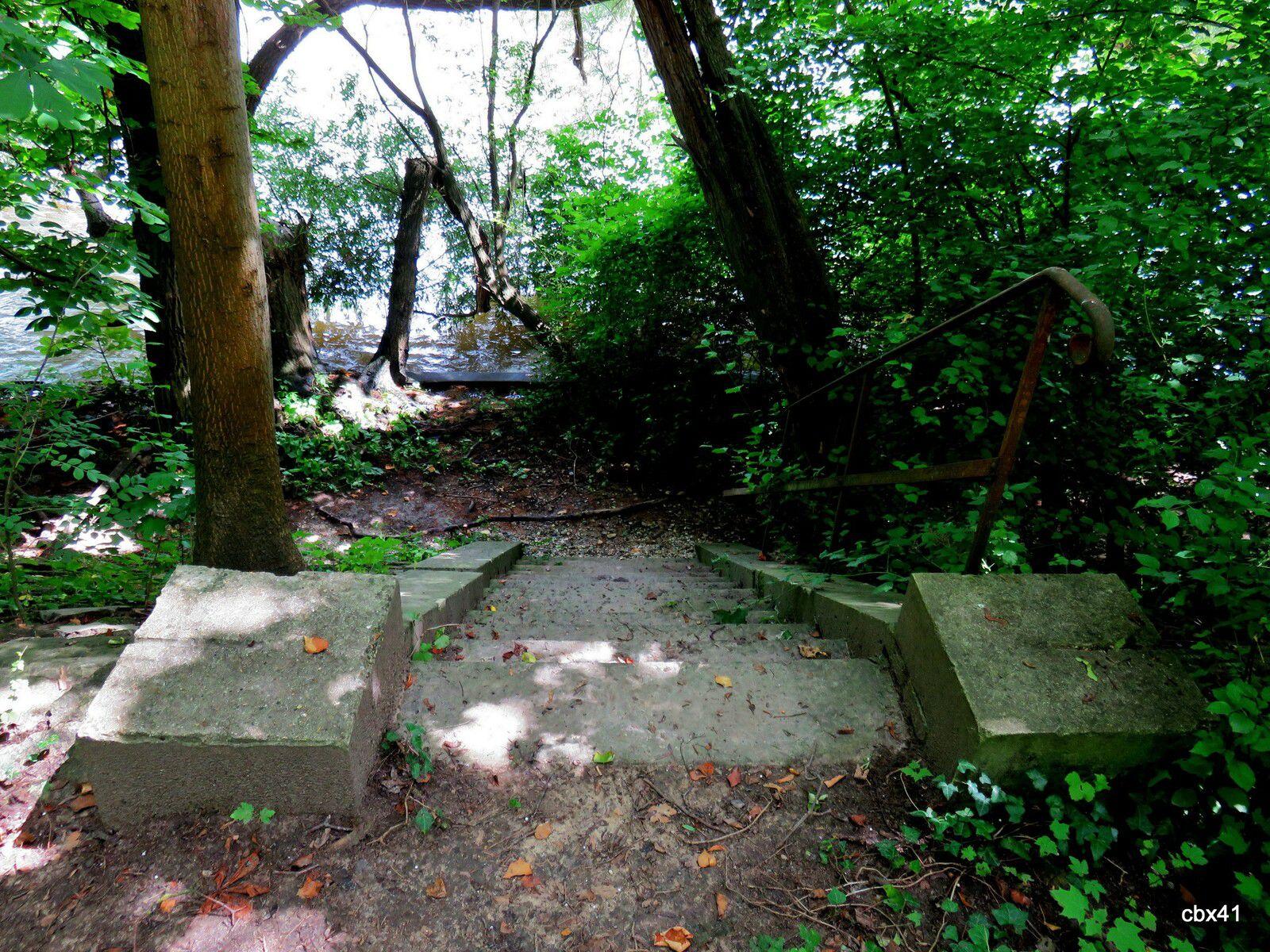 Villa Sapène, Alentours (Forêt du Mesnil-le-Roi)