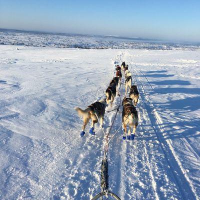 Pasvik Trail réussie