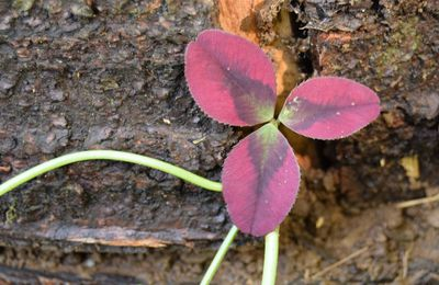 Journal du jardin, 13 juillet : plantations !