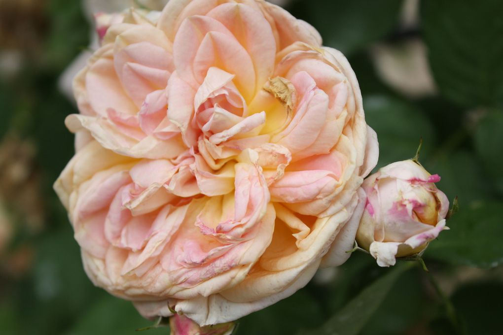 photo ajp l 'Haÿ les Roses 26 05 2018