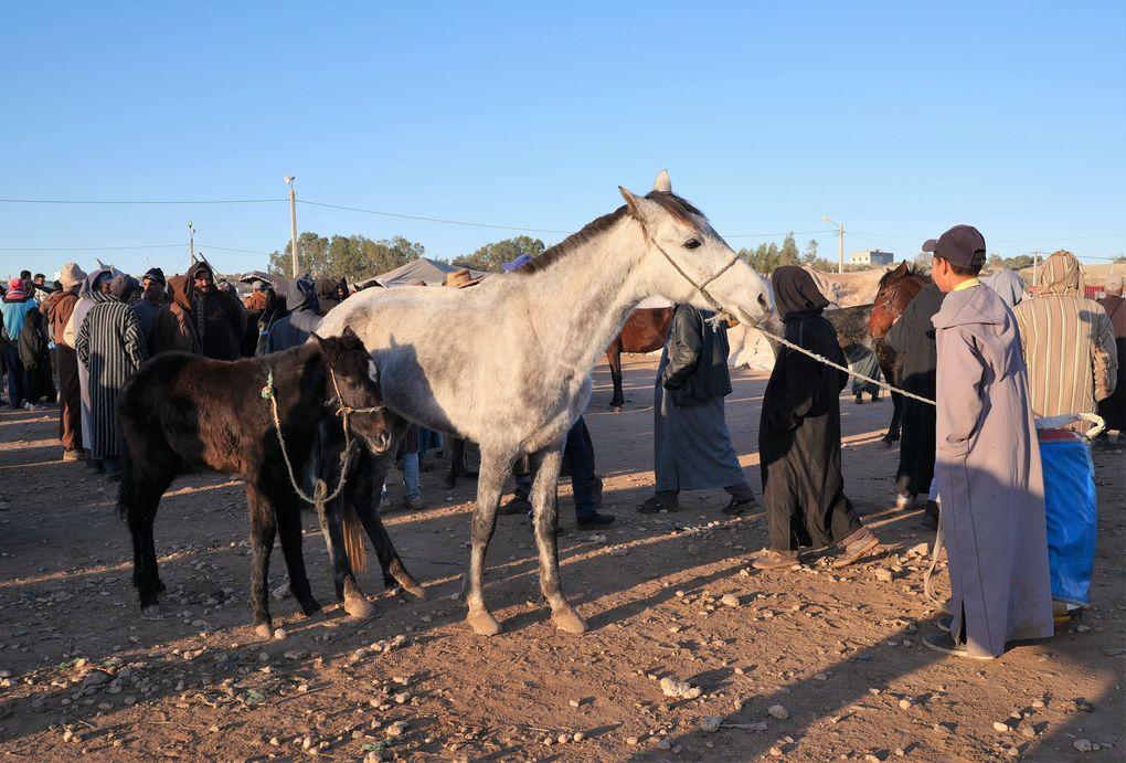 Sur la route menant à Had-Draa ( 30 km d'Essaouira ), tôt le dimanche matin, on voit des centaines de carrioles à cheval se diriger vers le marché. Les paysans se sont levés à 4 h du matin pour y faire leurs affaires, au moment où les animaux sont encore tous là..