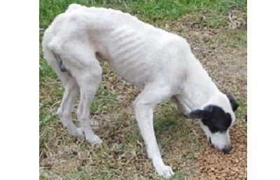 Combattre la faim des animaux de compagnie en Calédonie avec l'AaaC