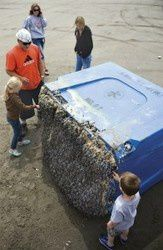 About tsunami debris arriving in the US