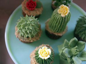 Des cactus beaux et bons pour  des plantes grasses délicieuses